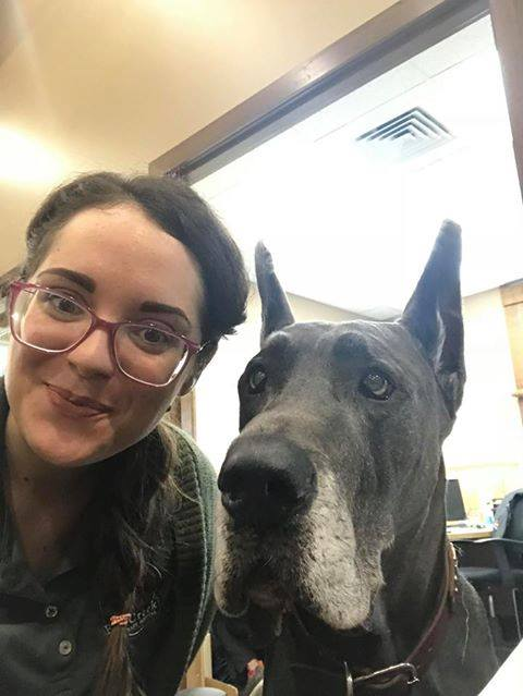 Team member Amber with a very large grey Great Dane