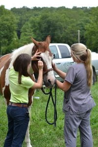 Two team members checking a horse's eyes